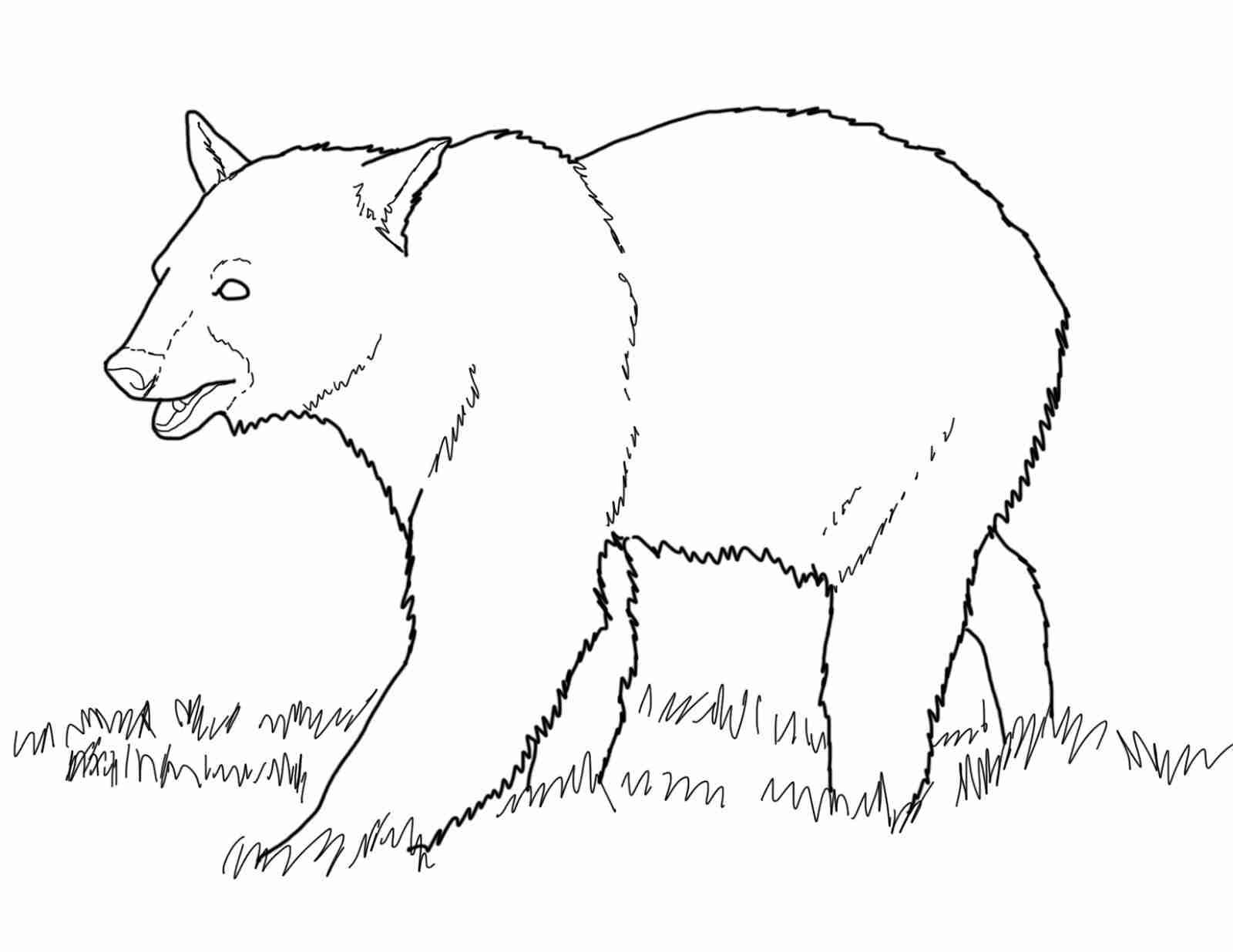 1600x1236 Black Bear Coloring Pages Olegratiy