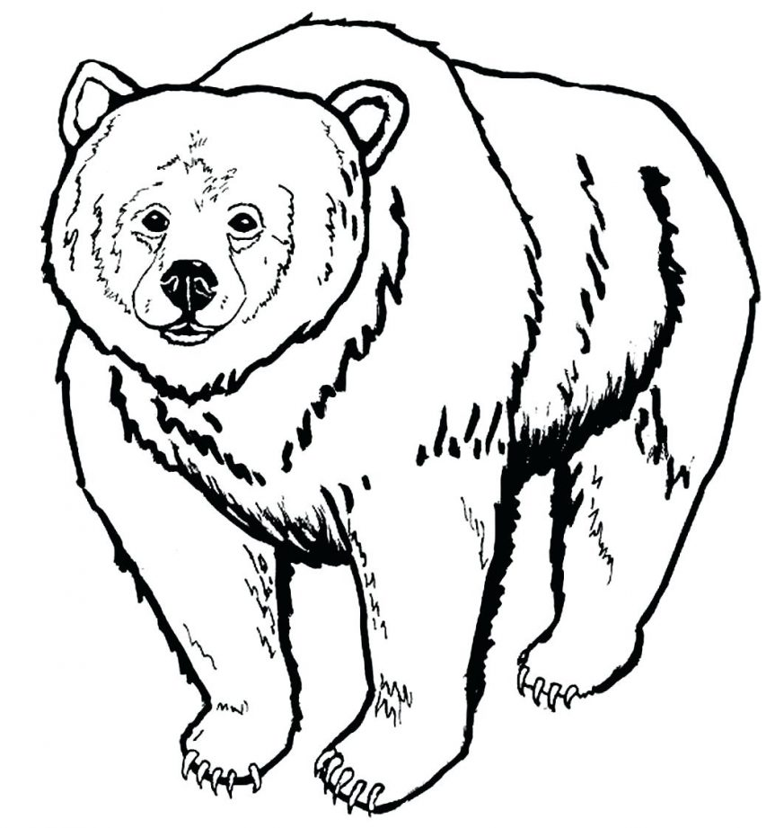 863x921 Black Bear Coloring Pages Coloring Pages Bear Coloring Pages New