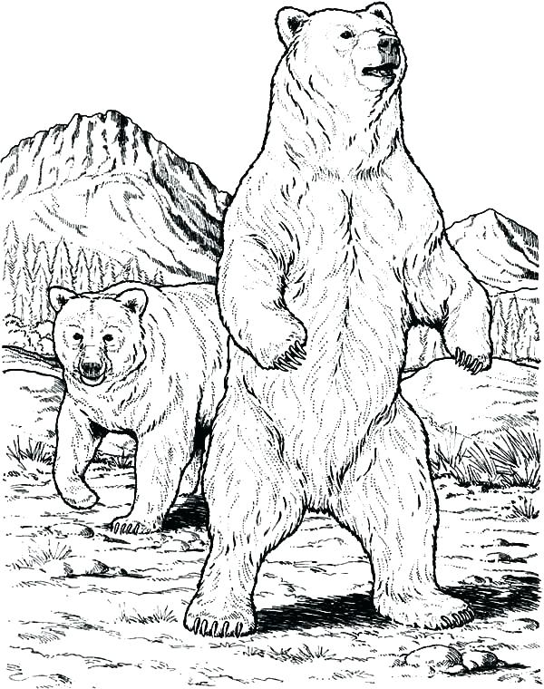 600x760 Black Bear Coloring Pages