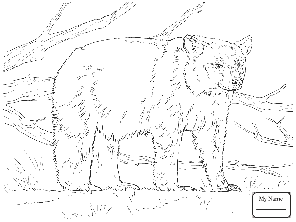 1224x918 Awesome American Black Bears Coloring Pages Collection Printable