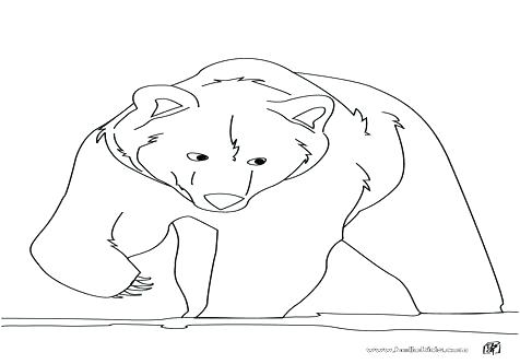 476x333 Black Bear Coloring Page Bear Face Coloring Page Care Bear