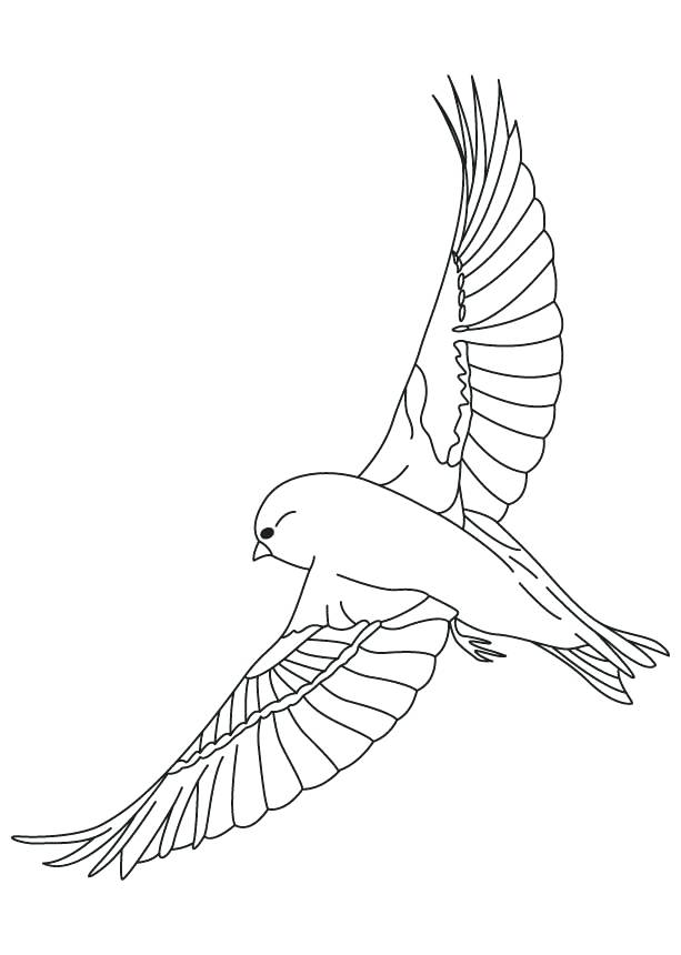 The Best Free Canary Coloring Page Images Download From 78 Free