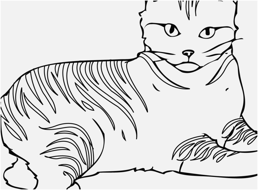 827x609 A Good Pictures Cat Coloring Pages Printable Most Helpful