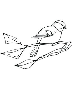 300x400 Black Capped Chickadee Coloring Page Black Capped Chickadee