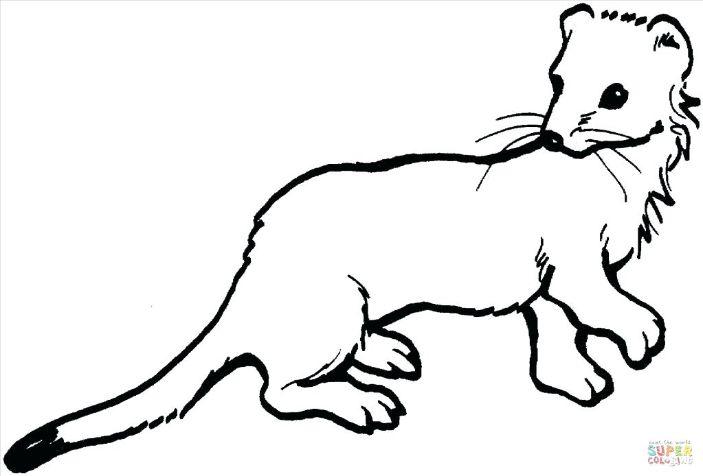 Black Footed Ferret Coloring Page
