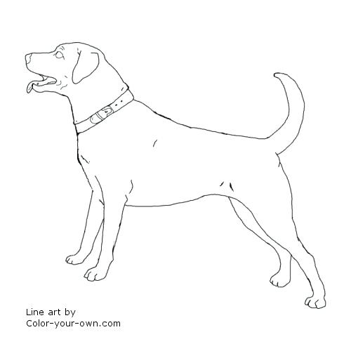 500x500 Black Lab Coloring Pages Royalty Free Retriever Illustrations