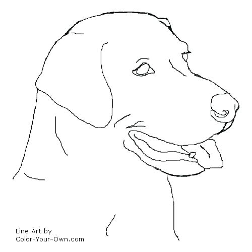 500x500 Free Black Lab Coloring Pages Website Inspiration Retriever Dog