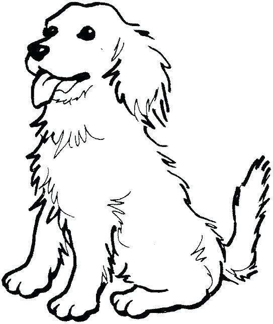 543x646 Yellow Lab Coloring Pages Coloring Page Of A Golden Retriever