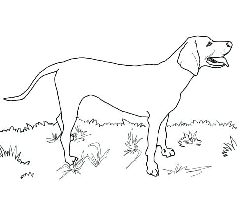 480x407 Coloring Black Lab Coloring Pages Google Search Free Printable