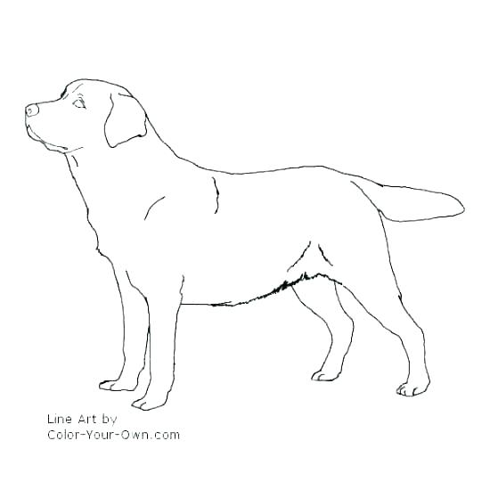 550x550 Black Lab Coloring Pages Dog Coloring Pages Printable Coloring