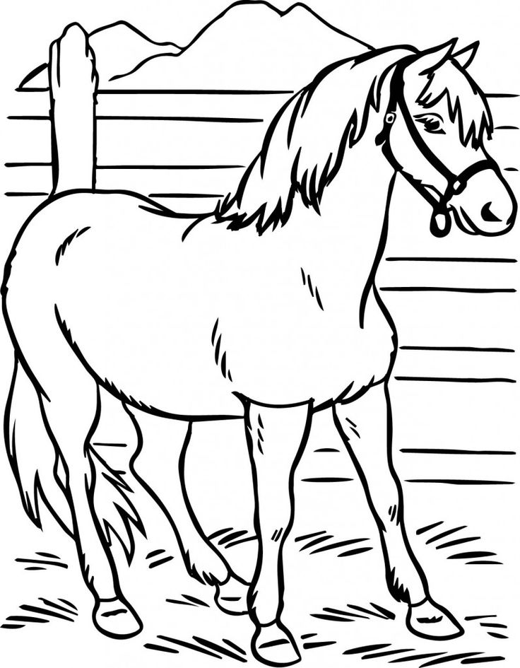 Black Stallion Coloring Pages