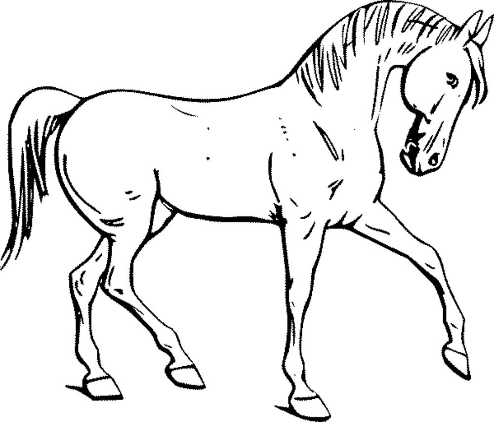 1000x855 Printable Horse Coloring Pages Of Horses