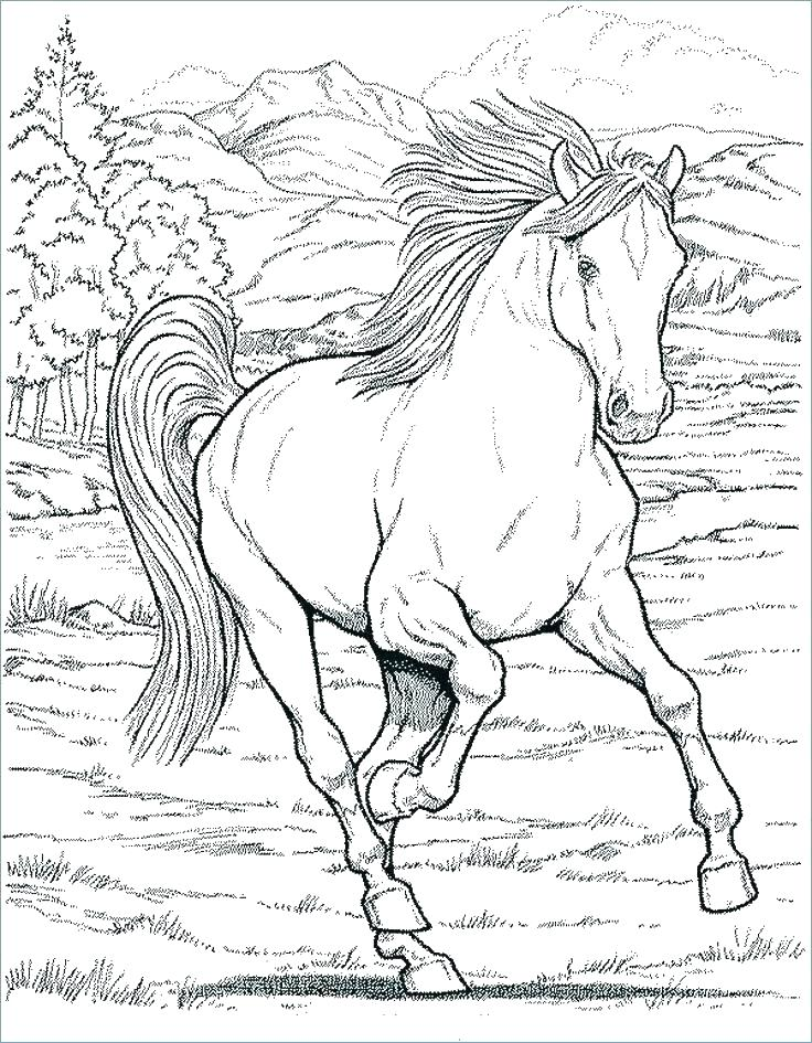 736x945 Stallion Coloring Pages Quarter Horse Coloring Pages Photo Stock