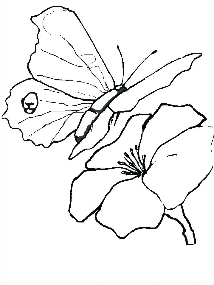 718x957 Butterfly Coloring Pages Butterfly Coloring Pages Best Photos