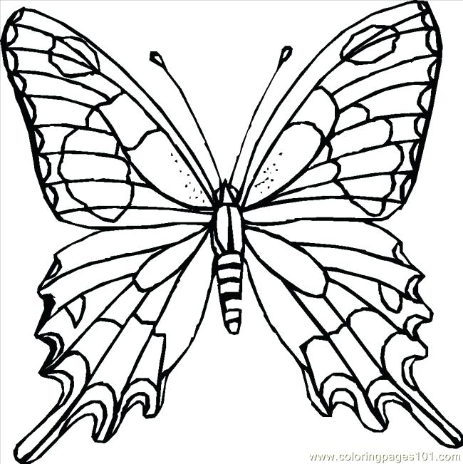 650x651 Butterfly Coloring Pages Free Butterfly Coloring Pages Printable