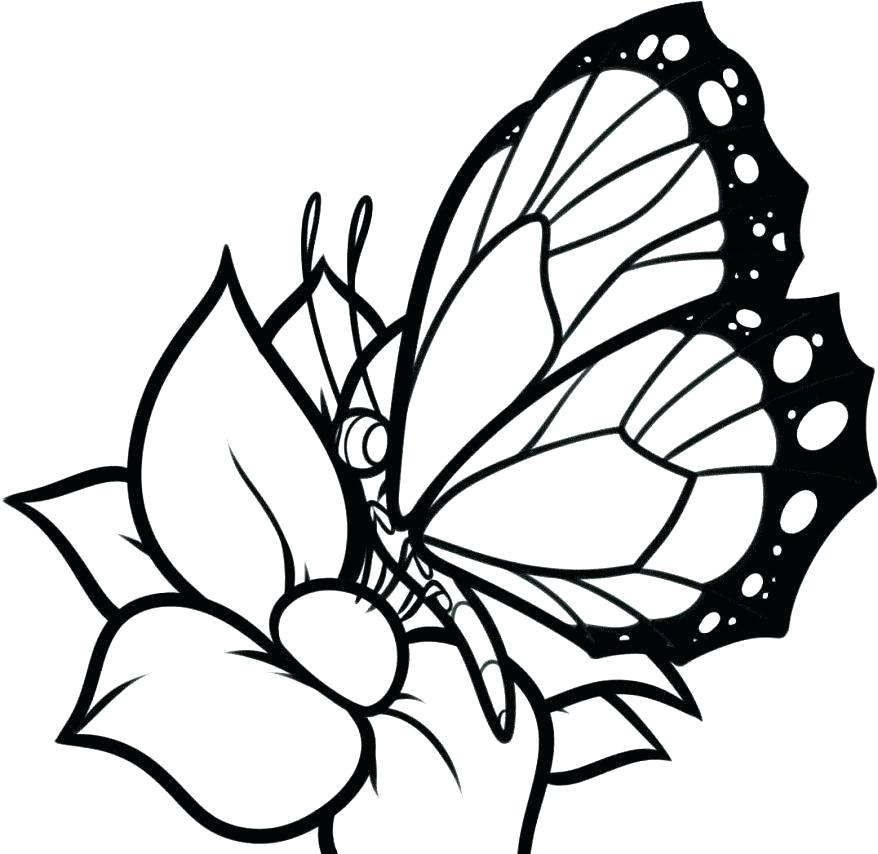 878x854 Butterfly Pattern Printable Kids Coloring Printable Butterfly
