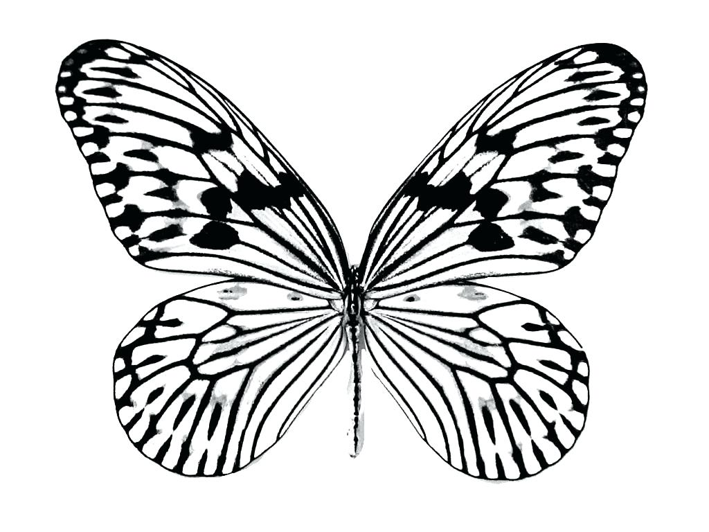 1024x768 Monarch Butterfly Coloring Pages Free Printable For Kids