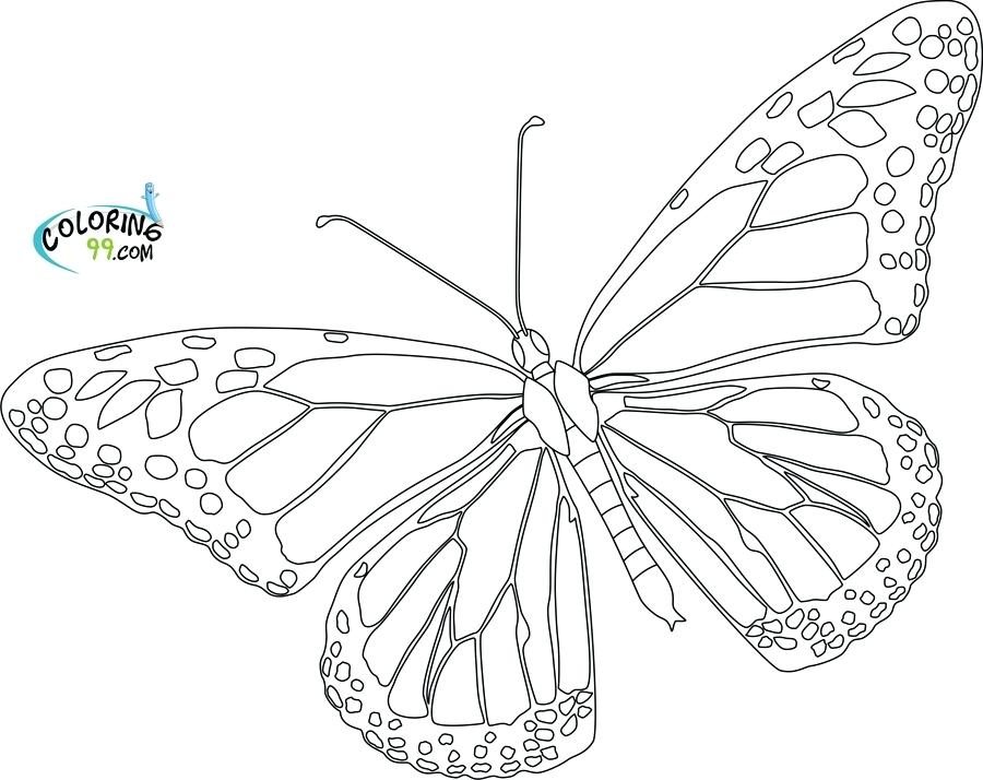 900x714 Best Photos Of Blank Butterfly Template Printable Butterfly