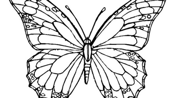585x329 Unlimited Blank Butterfly Template Outline Printable Pictures Free