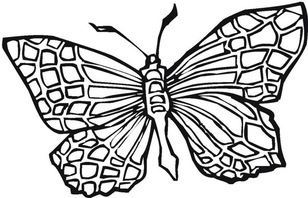 1048x676 Pattern Butterfly Coloring Pages Square Coloring Pages