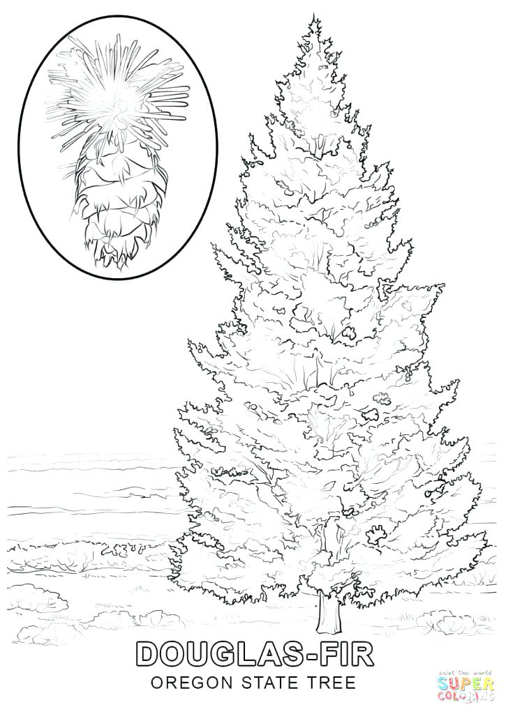 Blank Christmas Tree Coloring Page at GetDrawings.com | Free ...