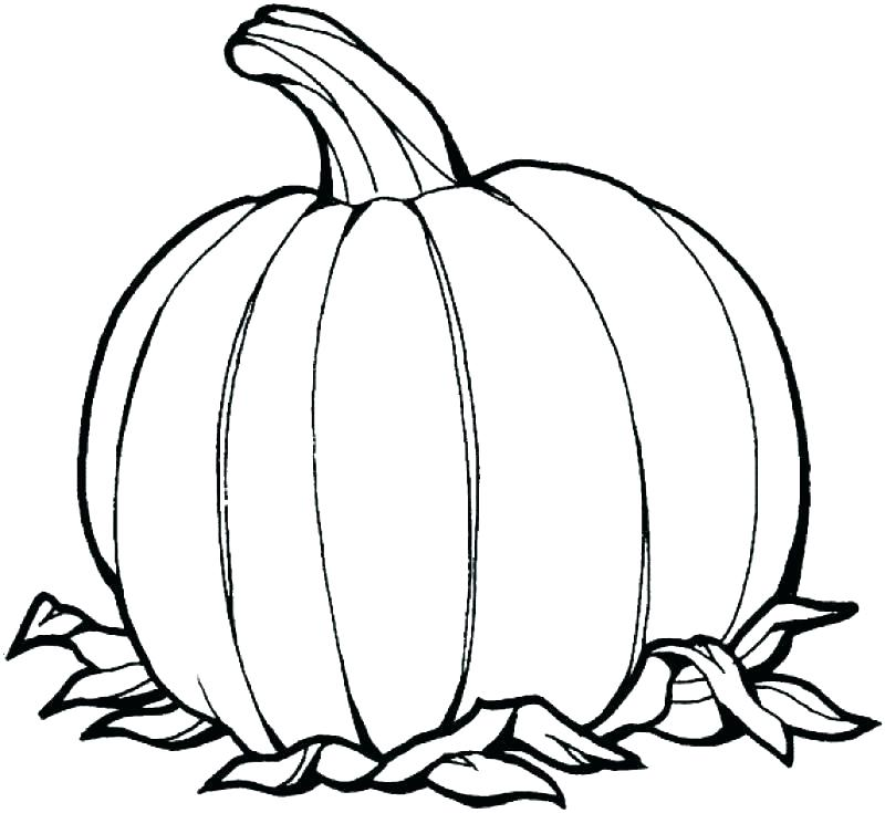 800x735 Pumkin Coloring Pages Free Blank Pumpkin Coloring Pages Pattern