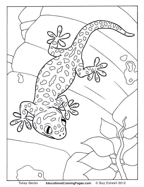 612x792 Leopard Gecko Coloring Pages Pin Colouring