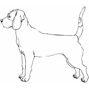 300x300 Bloodhound Coloring Page