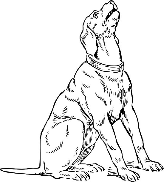 550x609 Bloodhound Coloring Pages Bloodhound Animal Coloring Pages Two