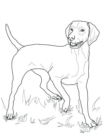 360x480 Bloodhound Coloring Pages Border Collie Coloring Pages Border