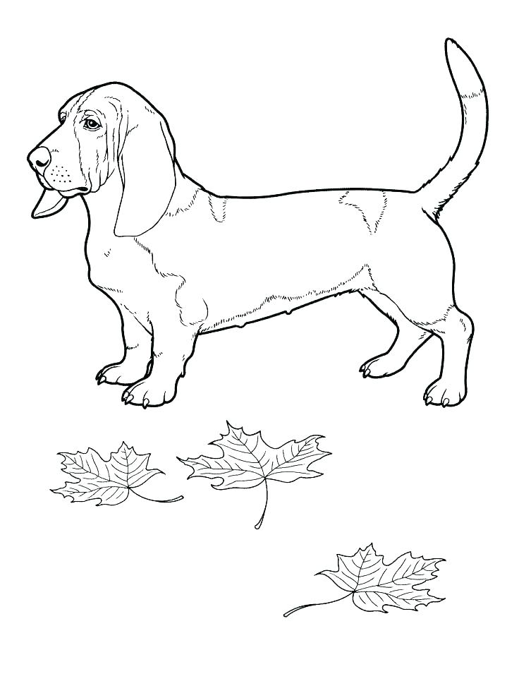 736x989 Bloodhound Coloring Pages Coloring Pages Online Disney