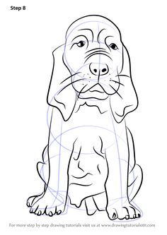 236x333 How To Draw Bloodhound Face
