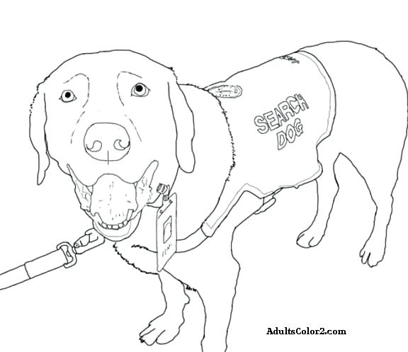 576x497 Jake The Dog Colouring Pages Pigment Coloring Page