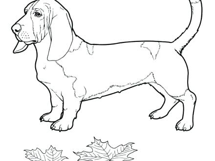 440x330 Basset Hound Coloring Pages Bloodhound Basset Hound Colouring Page