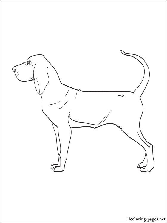 560x750 Bloodhound At Bloodhound Coloring Pages
