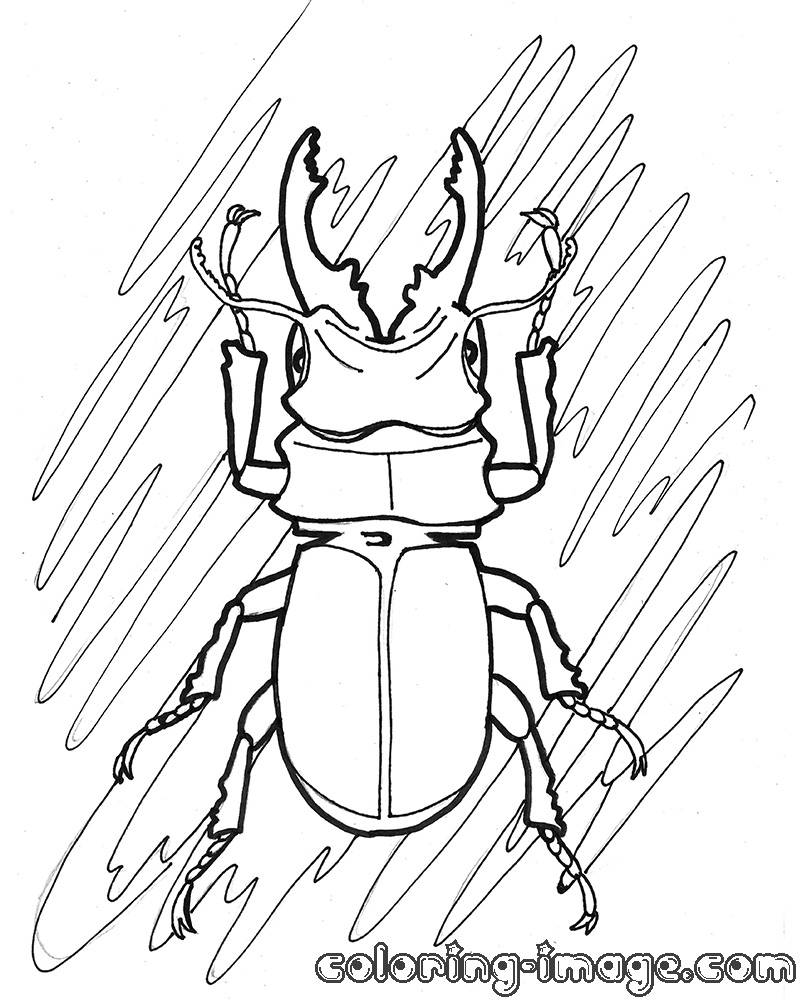 800x1000 Coloringor Kids Beetle Pages Blue Insect Toddlers Insects