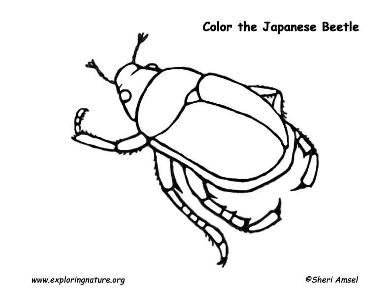 792x612 Beetle Coloring Page