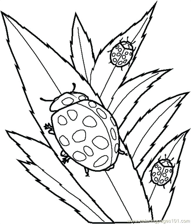 650x761 Beetle Coloring Page Insects Coloring Pages Insect Sheets Blue