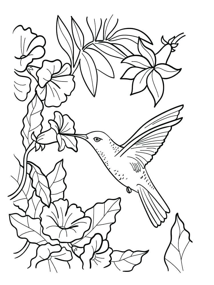750x1000 Bird Coloring Pages Humming Bird Coloring Page Blue Bird Coloring