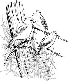 236x281 Bird Coloring Pages For Adults Page Of A Bird In Spring