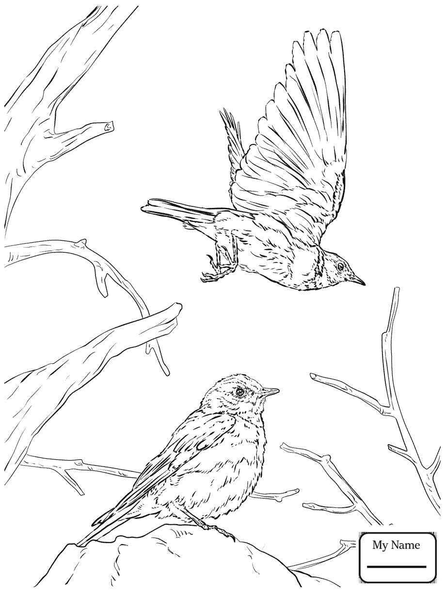 918x1224 Blue Bird Coloring Pages Birds Eastern Bluebird And Hawthorn