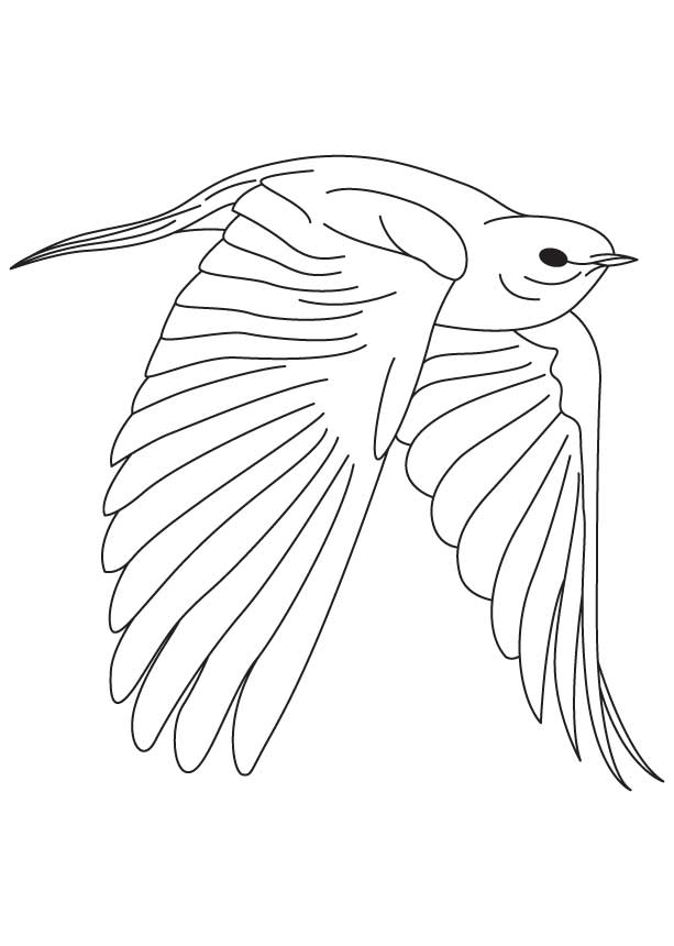 613x860 Blue Bird Coloring Pages Fearless Bluebird Coloring Page Download