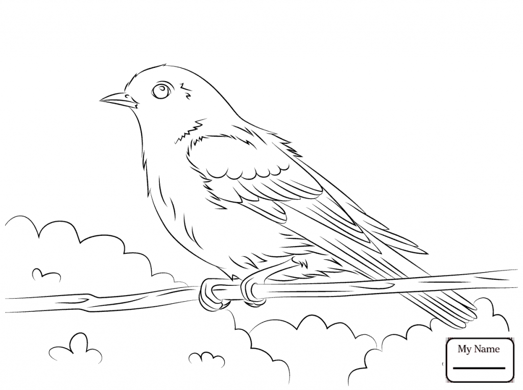 1024x764 Blue Bird Coloring Pages