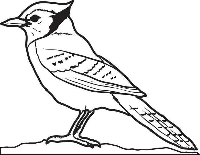 700x545 Blue Jays Colouring Pages Free Printable Blue Jay Coloring Page