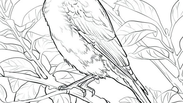 585x329 Bluebird Coloring Page Bluebird Coloring Page Eastern Bluebird