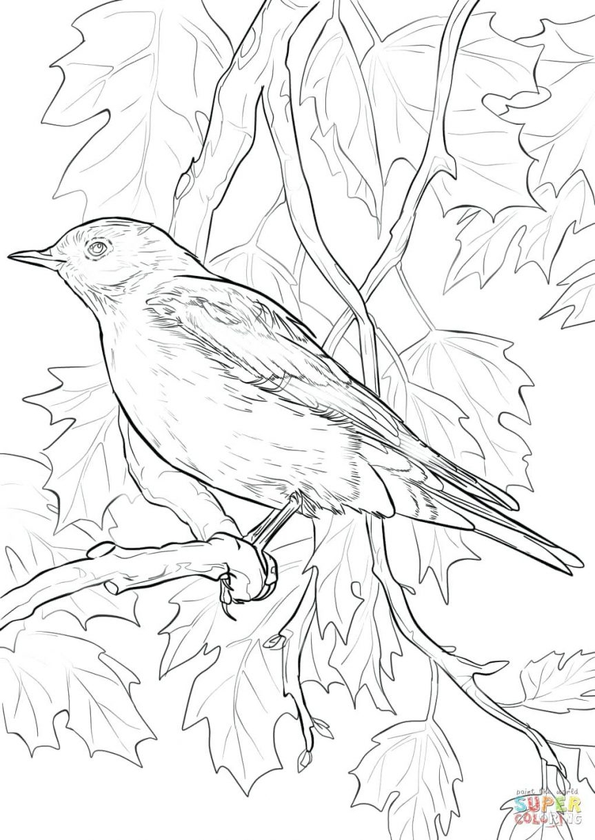 863x1218 Fresh Bluebird Coloring Pages For Kids Design Free Coloring Pages