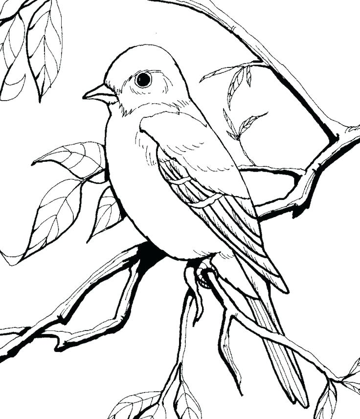 736x857 Idea Eastern Bluebird Coloring Page Or Eastern Bluebird Coloring