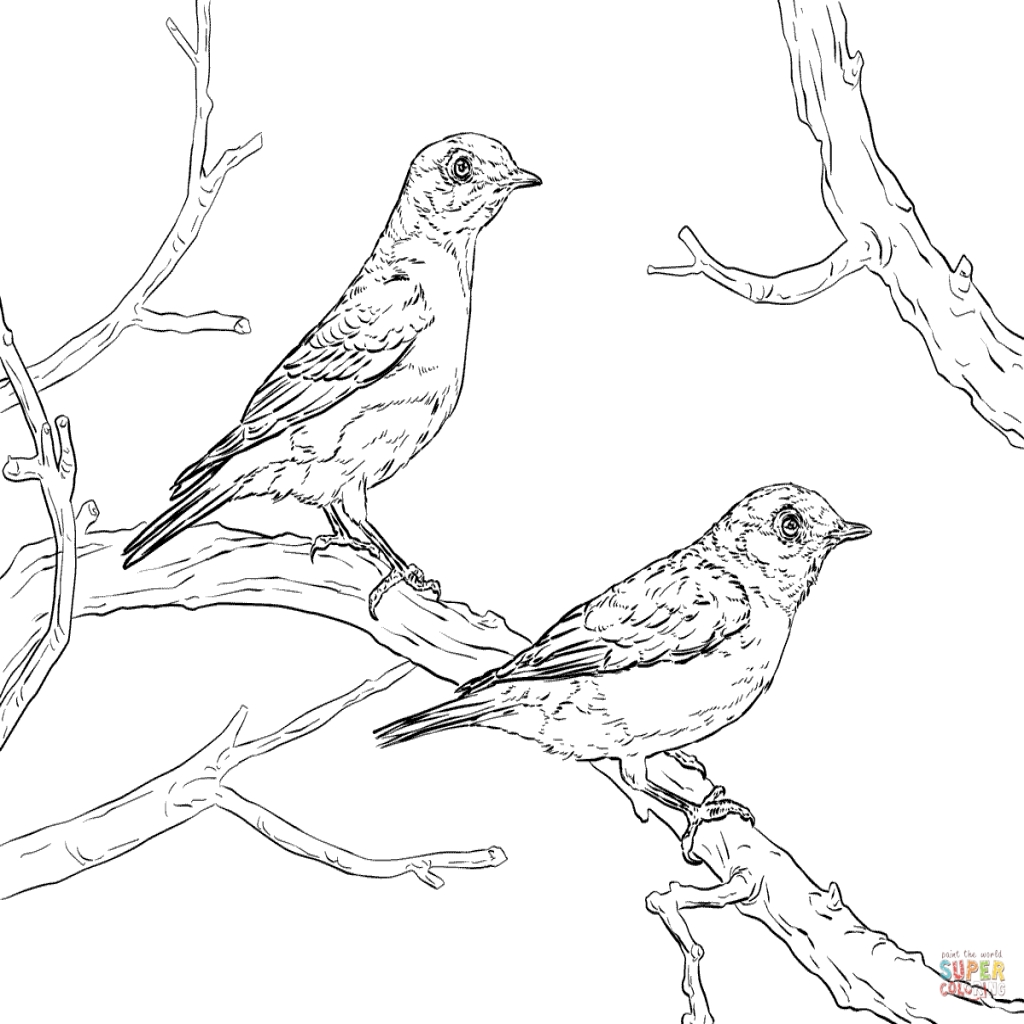 1024x1024 The Interesting Blue Bird Colouring Pages