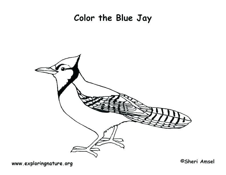 792x612 Blue Bird Coloring Pages