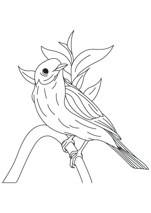 613x860 Awesome Eastern Bluebird Coloring Page Or Mountain Bluebird